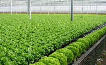 Kết hợp nông nghiệp sạch với du lịch sinh thái tại Vinpearl Nam Hội An Resort & Villas
